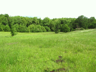 Dog_trail_meadow_b