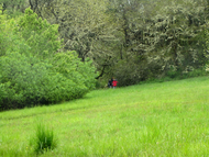 Dog_trail_meadow_a